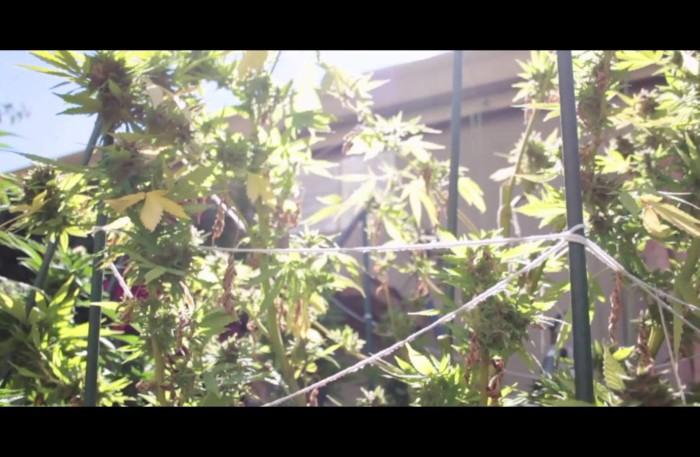 #WTW #Video @AMONEYMUZIC *MERRY* Directed x @THARAZOR