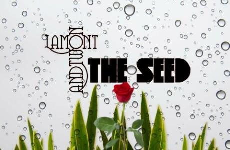 seed option 2